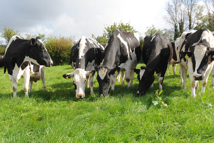 herdwatch cows