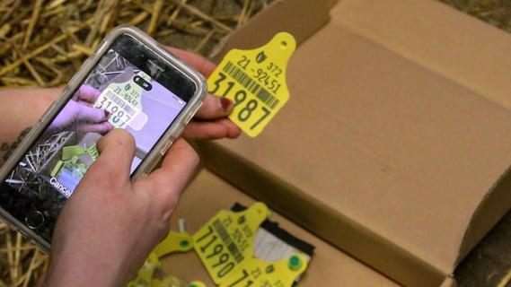 Herdwatch-calf-registartion-scan-tags