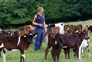British -Farmer- Cheshire- Dairy -Farm