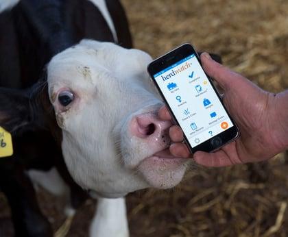 Herdwatch Calf care