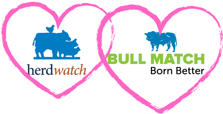 Bullmatch herdwatch
