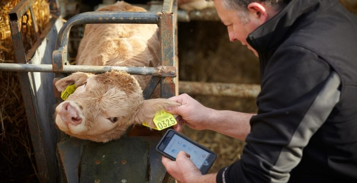 Herdwatch-calf-registration